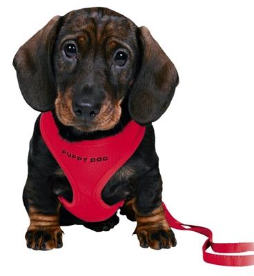 تصویر قلاده کتفی Trixie مخصوص توله سگ های نژاد کوچک (26 تا 34 سانتی متر) - مشکی