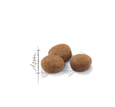 تصویر غذای خشک Royal Canin مخصوص گربه بالغ عقیم شده - ۲ کیلوگرم